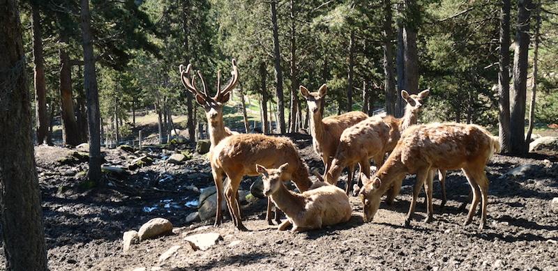 Nature et parc animalier au centre de vacances PEP 34 des Angles (Pyrénées-Orientales).