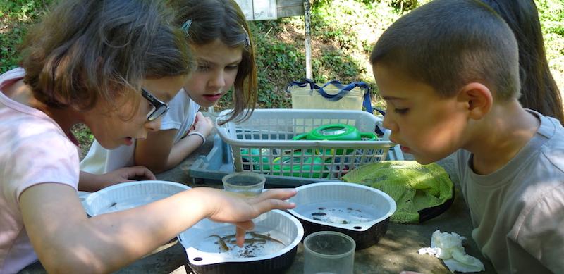 Les enfants découvrent la vie à la ferme en colonie de vacances.