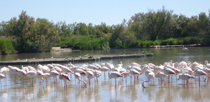 Le parc ornithologique du Pont de Gau à découvrir en colonie de vacances PEP 34.