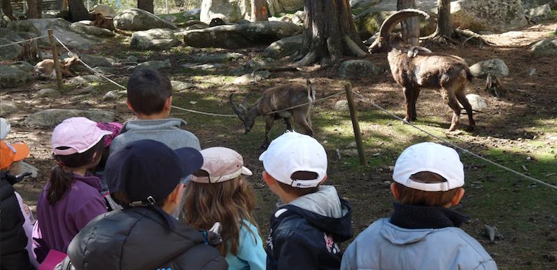 Le parc animalier des Angles.